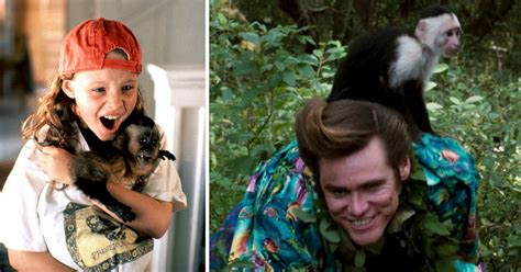 11 Monkey Movies That Made You Go Bananas As A Kid