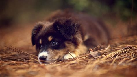 Cute Puppy Wallpapers Those Are Perfect To Make Your Mood