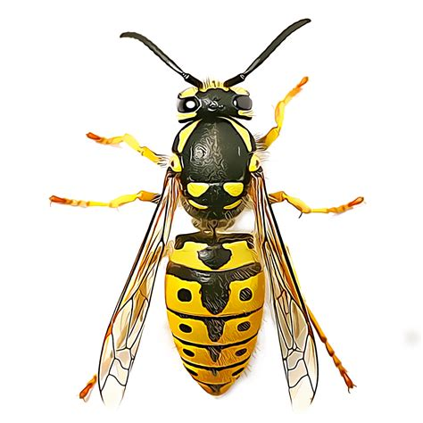 Identify and Control Wasps