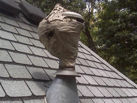 Hornet, Wasp & Stinging Insect Control in Atlanta