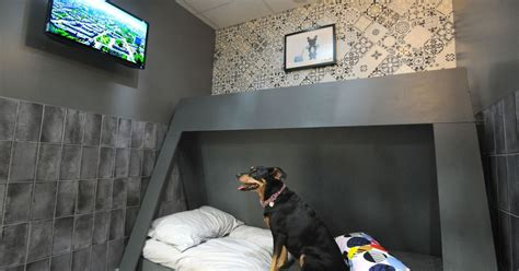 Look inside Merseyside's £1m five star dog hotel with